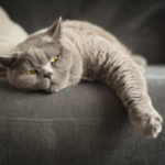 Cat laying on the couch